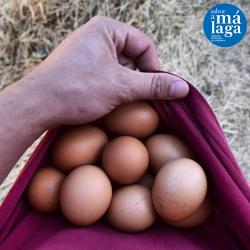 Estuche Carton Reciclado 12 Huevos