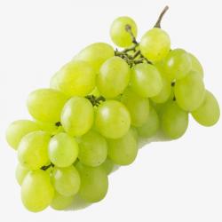 Uvas de Mesa Variedad Dominga